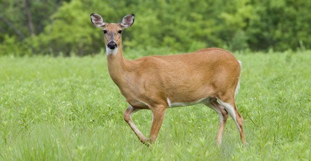 070531_deer-standing-Rock-S