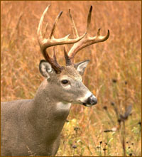 Deer-Herd-Management