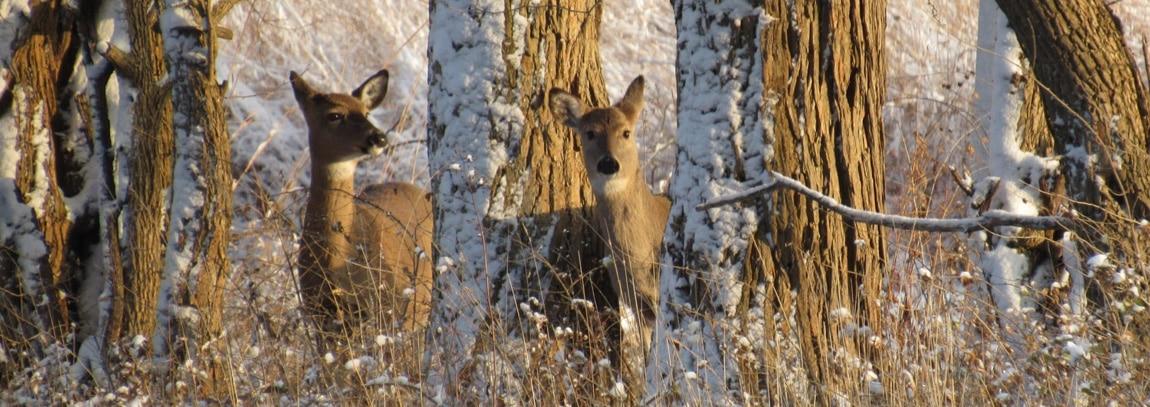 Deer Herd Management Banner