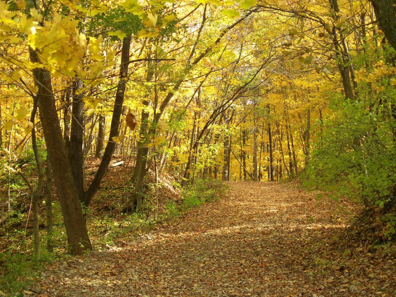 """""""Fall Back"""" Daylight Savings Hike"""