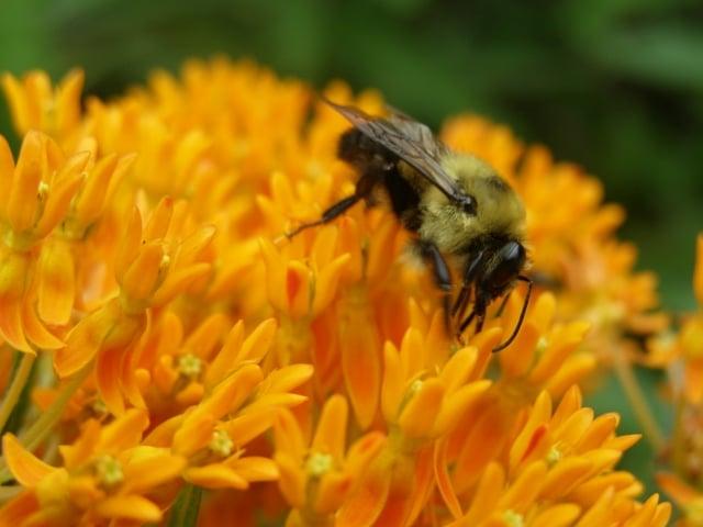 Preschool Peepers: Buzzing Bees