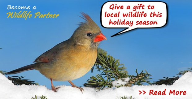 Give a Gift to Wildlife