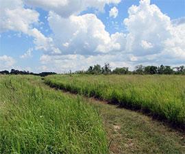 Prairie Ecology Hike
