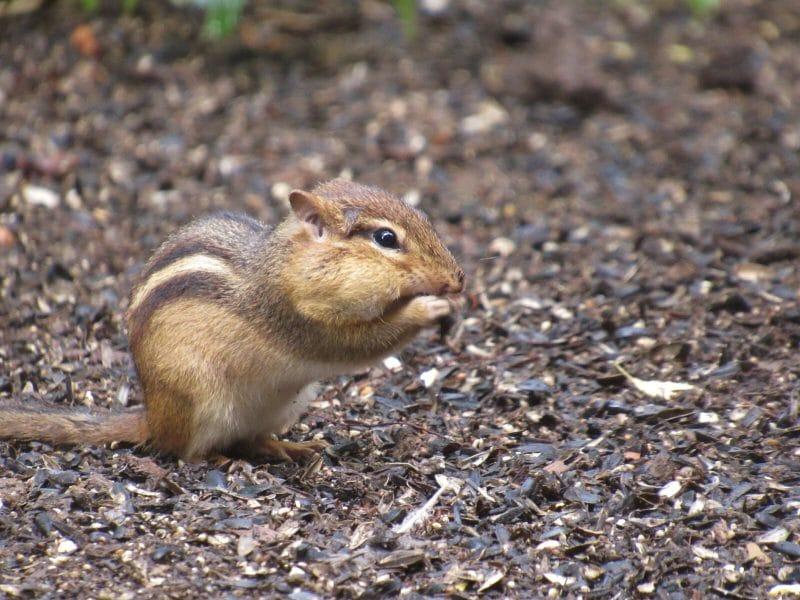 Mini Camp Chipmunks & Squirrels, Oh My!