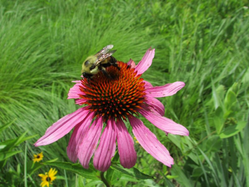 Pollinator Power