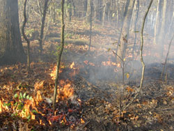 Prescribed-Fire-2