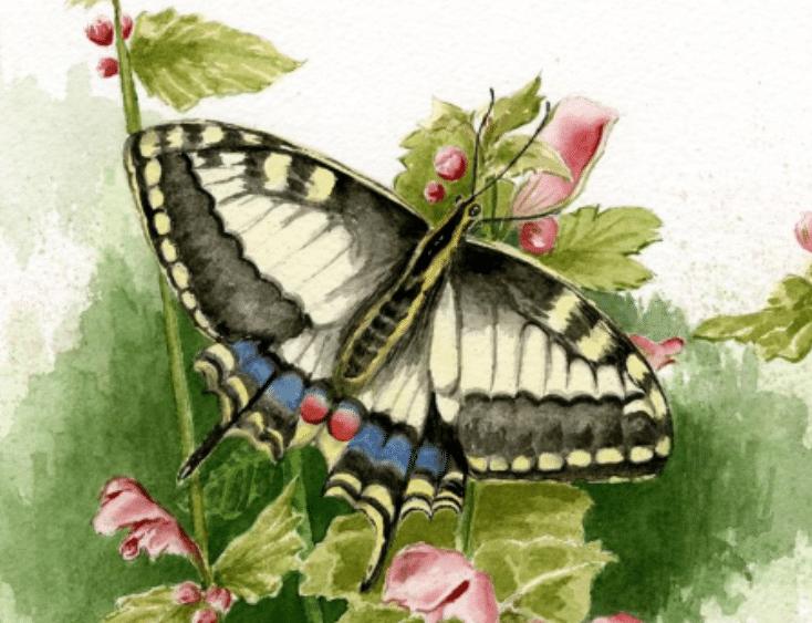 Sue Watts Watercolor Exhibit