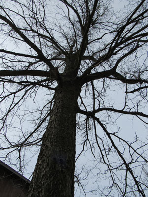 TreeID
