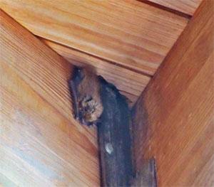 Bats in the Barn