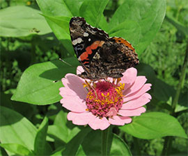 Beautiful Butterflies Mini Camp