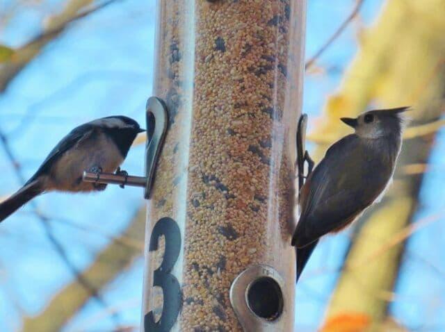 Decatur Audubon Society Meeting