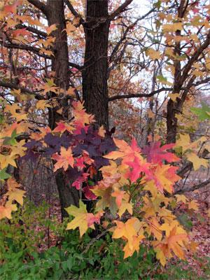 fall-color-hike