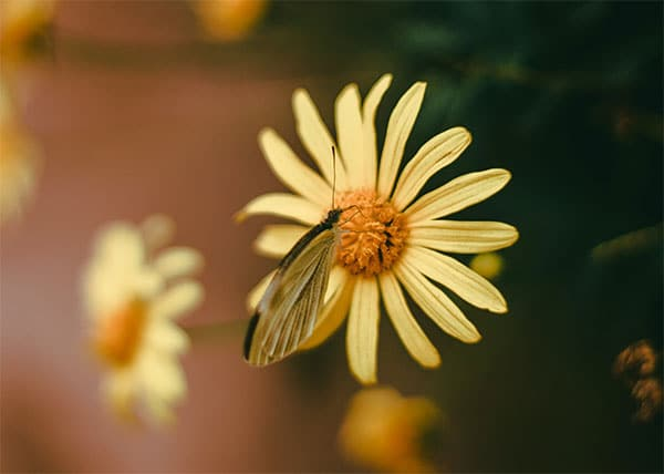 Mystical Moths