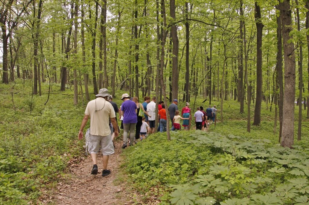 group of people hiking down a forest path, view from behind