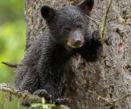 Teddy Bear Expedition Mini Camp