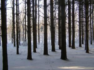 woods-pin